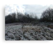 More frosty grass...but not the trees Canvas Print