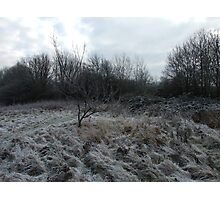 More frosty grass...but not the trees Photographic Print