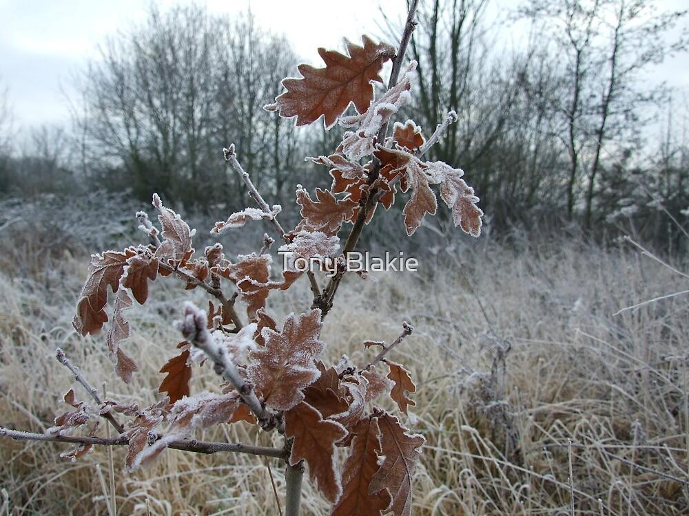 Frozen little tree by Tony Blakie