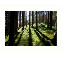 Backlit forest Art Print
