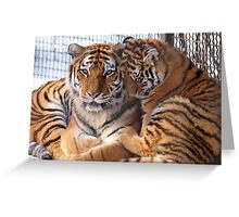 time for a cuddle Greeting Card