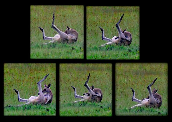 What ARE you doing Skippy by myraj