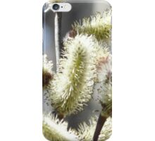 Pussy Willow Catkins. iPhone Case iPhone Case/Skin