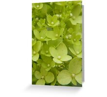 A Little Green Greeting Card