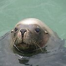 Sammy the sea lion Esperance by Jackson  McCarthy