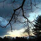 Lightning Branch by Sandra Hopko