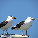 Two gulls on a light by Jackson  McCarthy