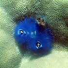 Christmas Tree Worms by springs