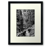 Behind the back fence ... Framed Print