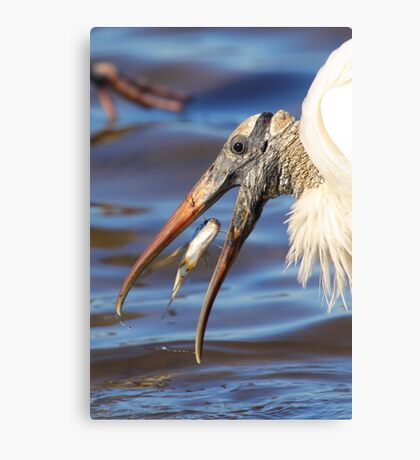 Nice Catch - Wood Stork Canvas Print