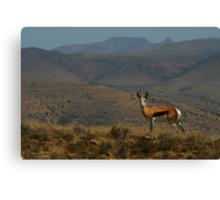 Springbok Landscape Canvas Print