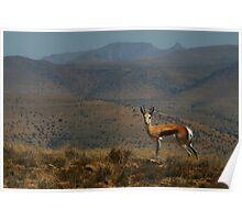 Springbok Landscape Poster