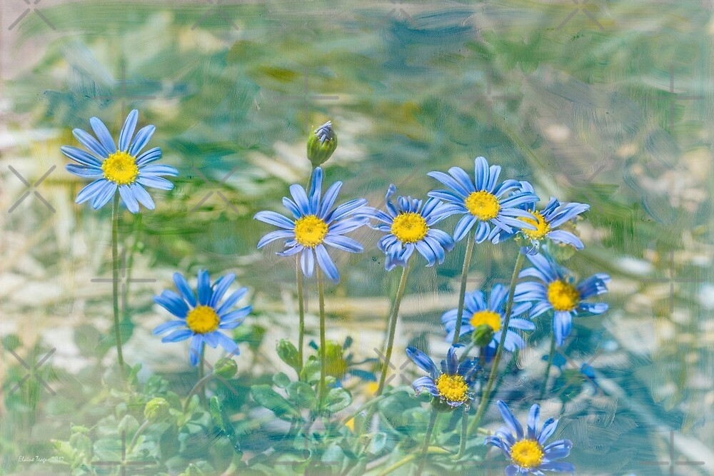 Blue Daisies by Elaine Teague