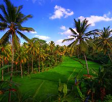 Indonesia by Felix Haryanto