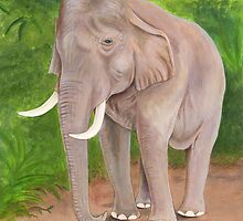 Asian Elephant (Elephas maximus) by Tamara Clark