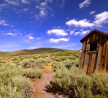 Dunny At Bodie by Natalie Ord