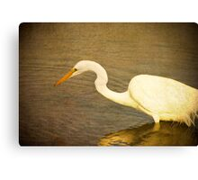 Early Morning Hunt Canvas Print
