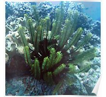 Green Feather Star Fish Poster
