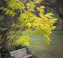 Quiet garden bench by George Petrovsky