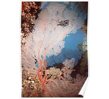 Gorgonian Fan Coral and Feather Star Fish Poster