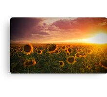 Colors Of A Late Evening Canvas Print