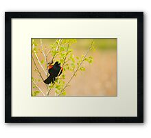 The Peekaboo Blackbird Framed Print