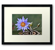 Water Lily Reflections Framed Print