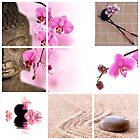 Bouddha and pink orchid - Collage by Delphimages