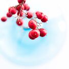 red berries by Ingrid Beddoes