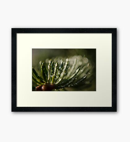 Spruce Needle in the Morning Dew Macro Photography Framed Print