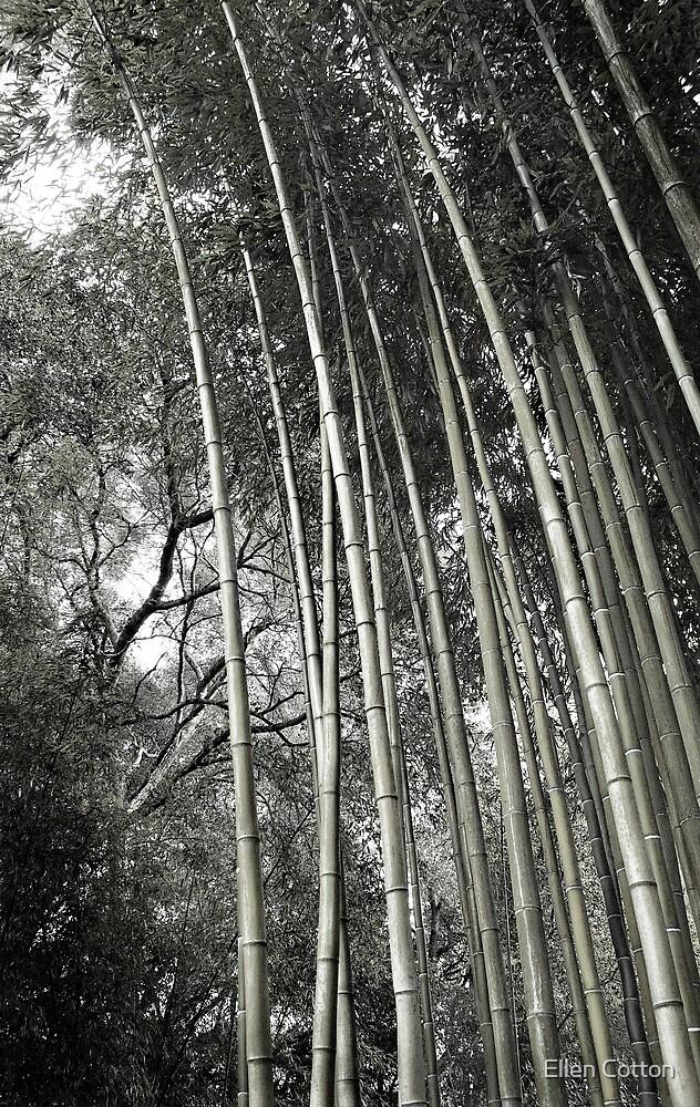 Hakone Bamboo 1 by Ellen Cotton