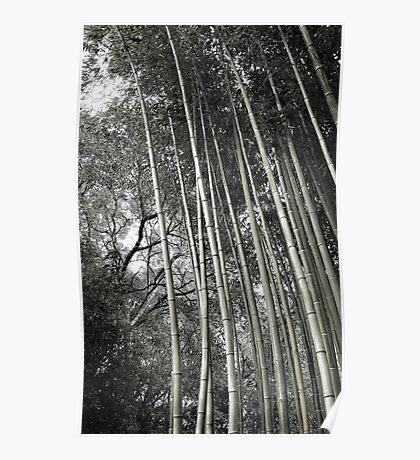 Hakone Bamboo 1 Poster