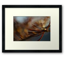 Abstract Spruce Needles Macro Photography Framed Print