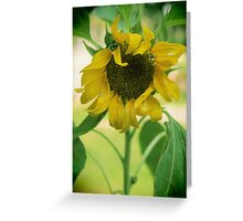 Sunny Delight Greeting Card