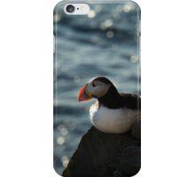 Atlantic puffin seating on rock iPhone Case/Skin