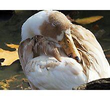 Let Sleeping Ducks Lie Photographic Print