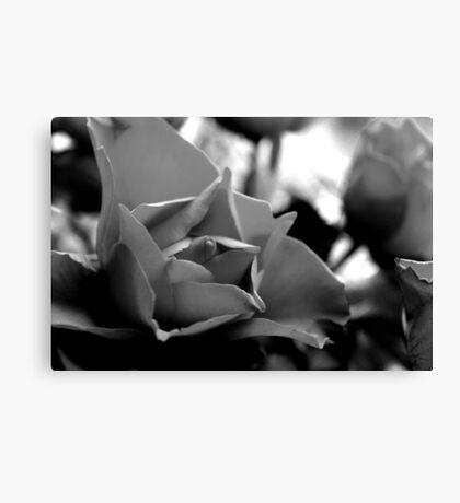 Rose Closeup (B&W) Canvas Print