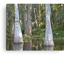 Mr and Mrs Cypress Canvas Print