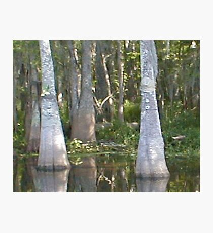 Mr and Mrs Cypress Photographic Print