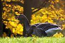 Geese in Autumn by Jo Nijenhuis