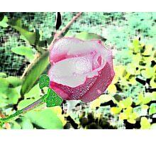 Redone Rose Photographic Print