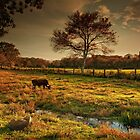 The Lone Grazer by Robin-Lee