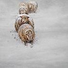 Frozen Fleece by Robin-Lee
