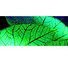 Abstract Leaf Print  ^ Photographic Print