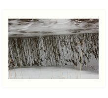 Marsh Grass Reflections with Ice 1 Art Print