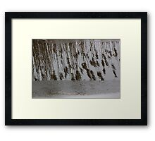 Marsh Grass Reflections with Ice 14 Framed Print