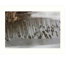 Marsh Grass Reflections with Ice 17 Art Print