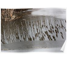 Marsh Grass Reflections with Ice 17 Poster
