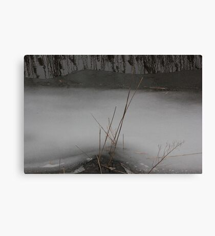 Marsh Grass in Ice Canvas Print