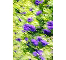 Petunias ??? Photographic Print